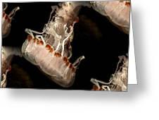Sea Nettle Jellyfish Greeting Card