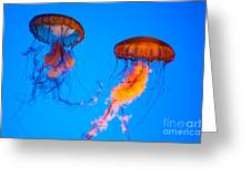 Sea Nettles Greeting Card by Anthony Sacco