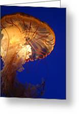 Sea Nettles V 2 Greeting Card