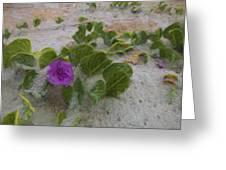 Sea Oat Purple Greeting Card