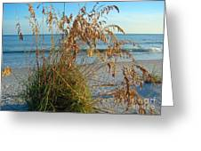 Sea Oats 1 Greeting Card