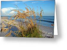 Sea Oats 2 Greeting Card