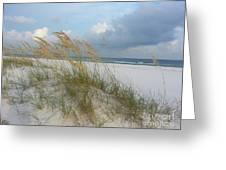 Sea Oats  Blowing In The Wind Greeting Card