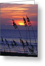 Sea Oats By The Sea Greeting Card