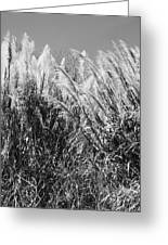 Sea Oats In The Glades Greeting Card