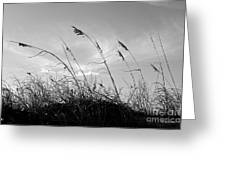 Sea Oats Silhouette Greeting Card