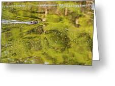 Sea Of Green Greeting Card