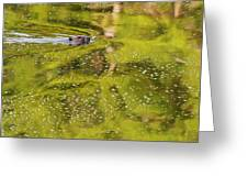 Sea Of Green Square Greeting Card