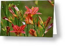 Sea Of Lilies Greeting Card