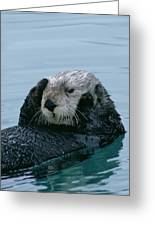 Sea Otter Grooming Greeting Card
