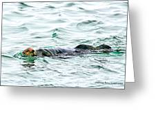 Sea Otter In Northern Cali Greeting Card by Rebecca Adams
