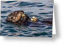 Sea Otter With Clam 2 Greeting Card