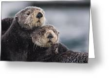 Sea Otters Huddled Together Greeting Card