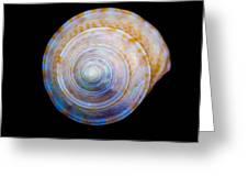 Sea Shell 3 Greeting Card