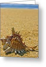 Sea Shell By The Sea Shore Greeting Card