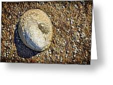 Sea Shell By The Seashore Greeting Card