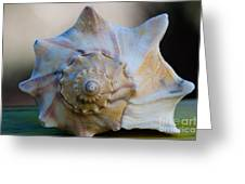 Sea Shell Greeting Card