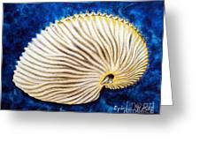 Sea Shell Original Oil On Canvas No.2. Greeting Card by Drinka Mercep