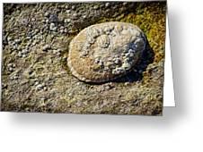 Sea Shell Rock Greeting Card