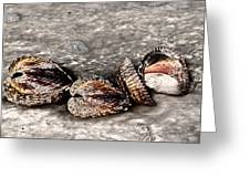 Sea Shells 2 Greeting Card