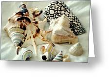 Sea Shells- Colorful Collection Greeting Card