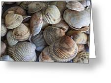 Sea Shells Greeting Card by Jeff Swanson