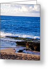 Sea Shelves Greeting Card