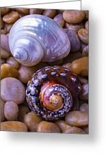 Sea Snail Shells Greeting Card