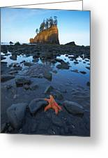 Sea Stacks And Star Fish Greeting Card