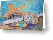Sea Star-abalone-snail Shell Greeting Card