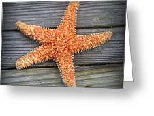 Sea Star On Deck 2 Greeting Card
