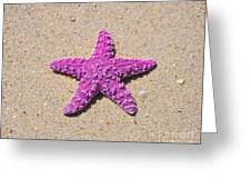 Sea Star - Pink Greeting Card