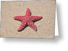 Sea Star - Red Greeting Card