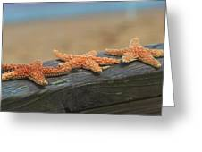 Sea Star Trio Greeting Card