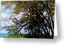 Sea Through Trees Greeting Card