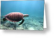 Sea Turtle 5 Greeting Card