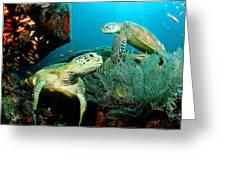 Sea Turtle Oil On Canvas Greeting Card