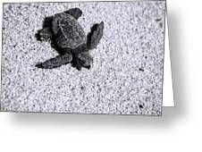 Sea Turtle In Black And White Greeting Card