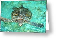 Single Sea Turtle Swimming Through The Water Greeting Card