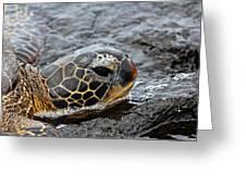 Sea Turtle Puako Tidepools Greeting Card