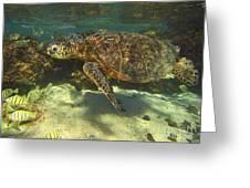 Sea Turtle Swimming Greeting Card by Bette Phelan