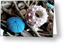 Sea Urchin Duo Greeting Card