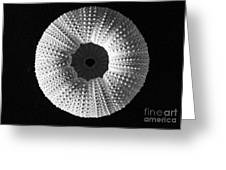 Sea Urchin In Black And White Greeting Card