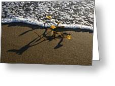 Sea Weed And A Wave Greeting Card