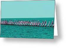 Seabird Lineup Greeting Card