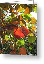 Seagrape Leaves Greeting Card