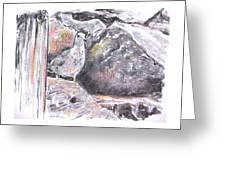 Seagull Among The Rocks Greeting Card