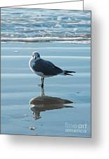 Seagull At Attention Greeting Card