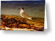 Seagull At The Keys Greeting Card