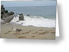 Seagull At The Sea Greeting Card
